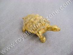 TURTLE FOR FRONT MUDGUARD